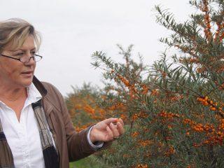 Ilona Schreiber ist Geschäftsführerin der Sanddorn Storchennest GmbH, mit rund 100 Hektar eine der größten Sanddornplantagen in Deutchland. Foto: Landwehr